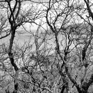 Atlantic-Hazel-woodland