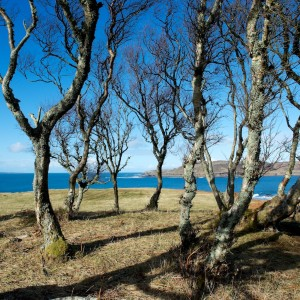 Mull_Atlantic_hazel_woodland
