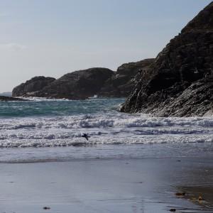 Mull Kilvickeon beach oystercatchers