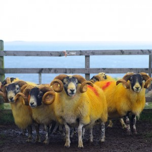colourful tupping time