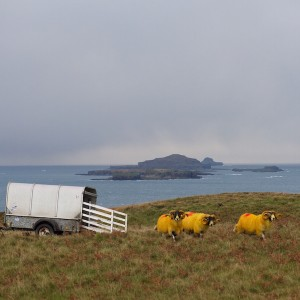 tupping Mull time