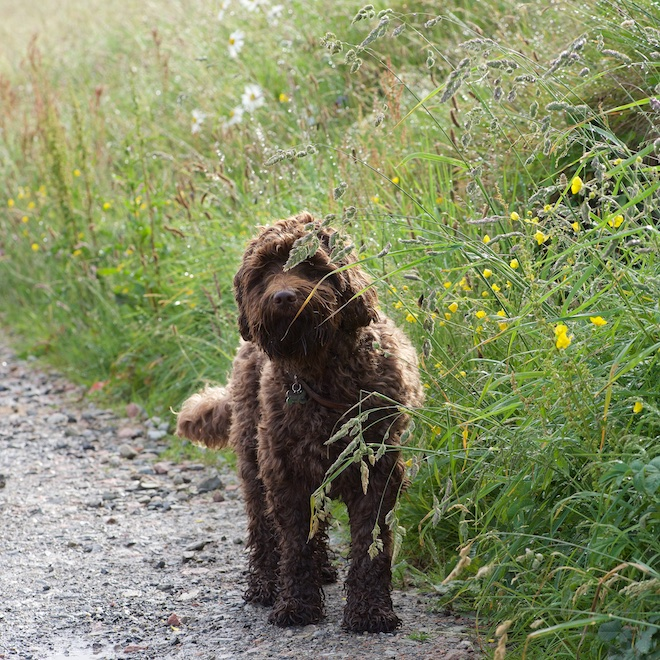 Coco pet friendly cottages Mull