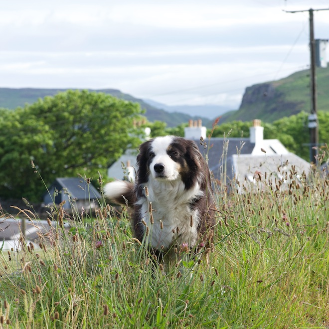 Jan pet friendly cottages Mull