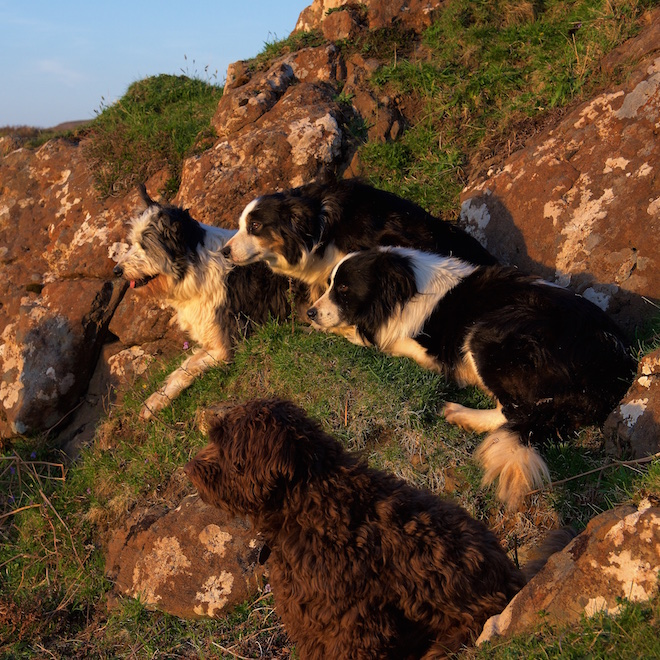 Treshnish pet friendly cottages Mull