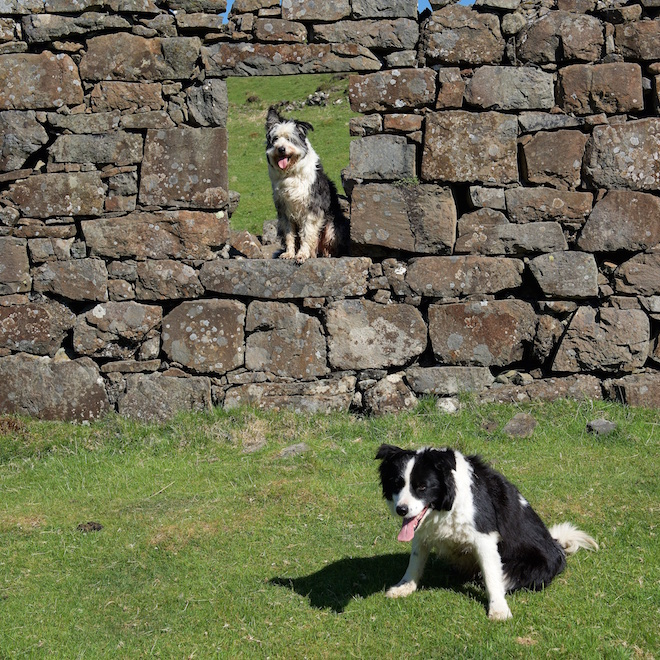 Walter Cap pet friendly cottages Mull