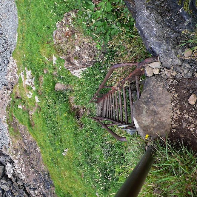 Burg fossilised tree Mull ladder