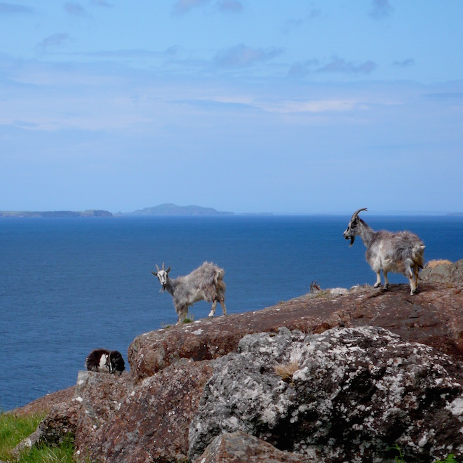 Goats Mull fossilised tree