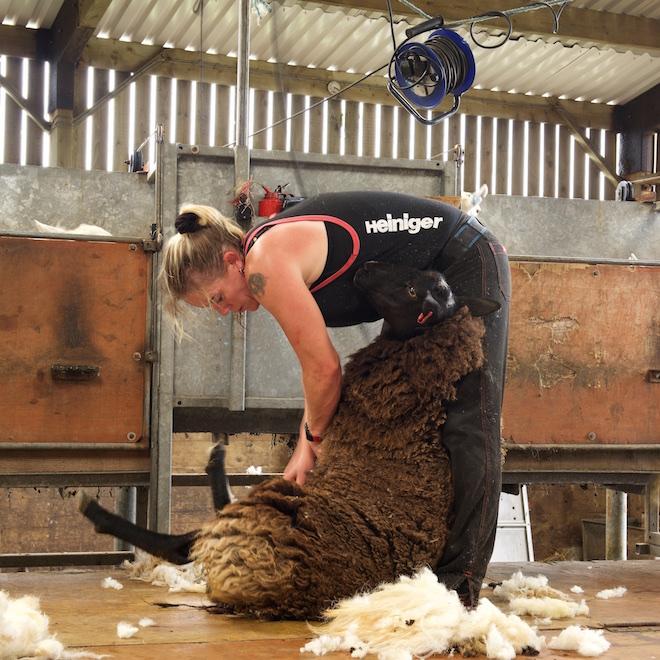 RM Mull cottages Treshnish sheep shearing