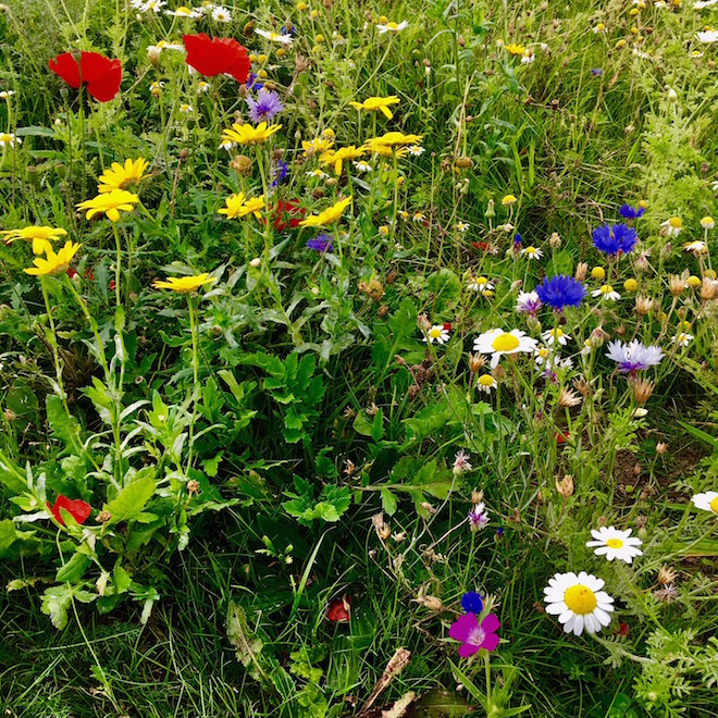 getting-to-mull-wild-flowers-m5
