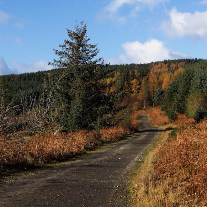 treshnish-mull-cottages-forestry-track-fank