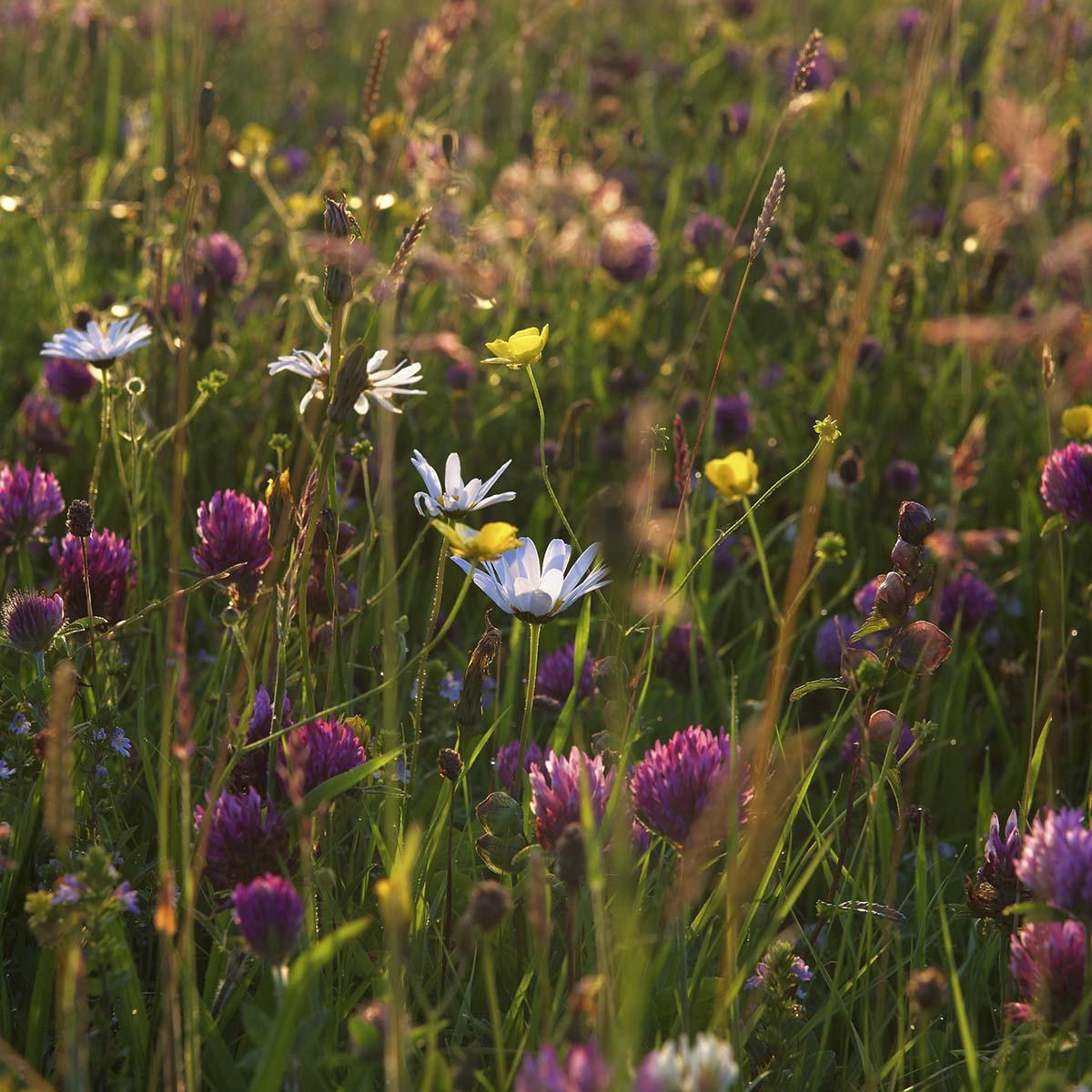 Treshnish, Mull, biodiversity, environment, what you can do