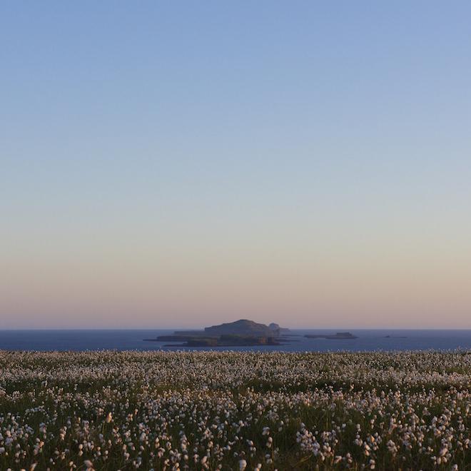 favourite places to watch sunset Treshnish cottages Mull bog cotton