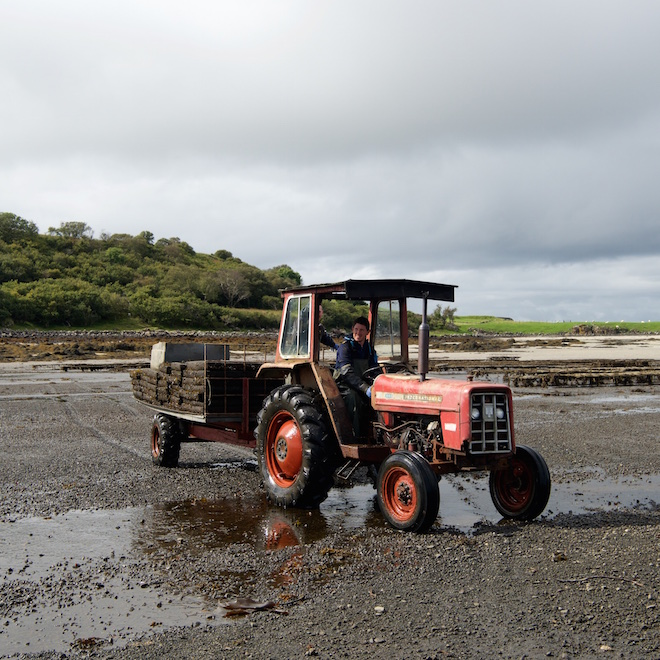 isle of mull oysters tour red tractor