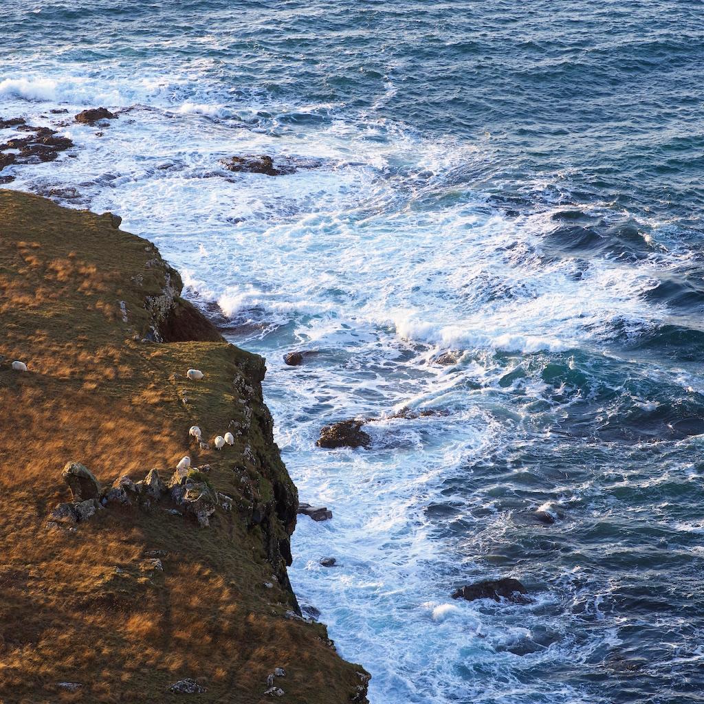 Treshnish Mull cottages sheep waves cliffs