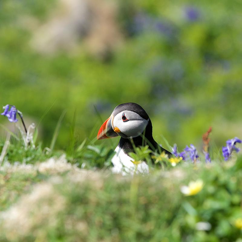 Staffa and the Treshnish Isles