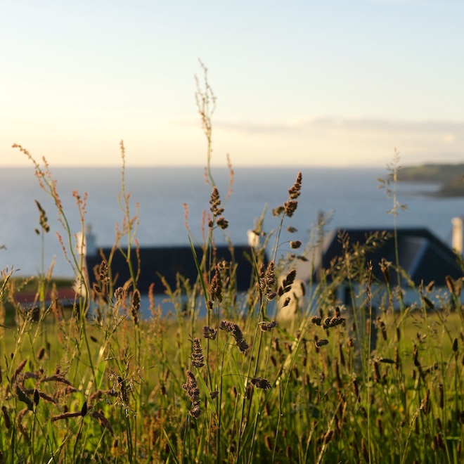 OPen farm Sunday 2018 Treshnish cottages Mull grasses