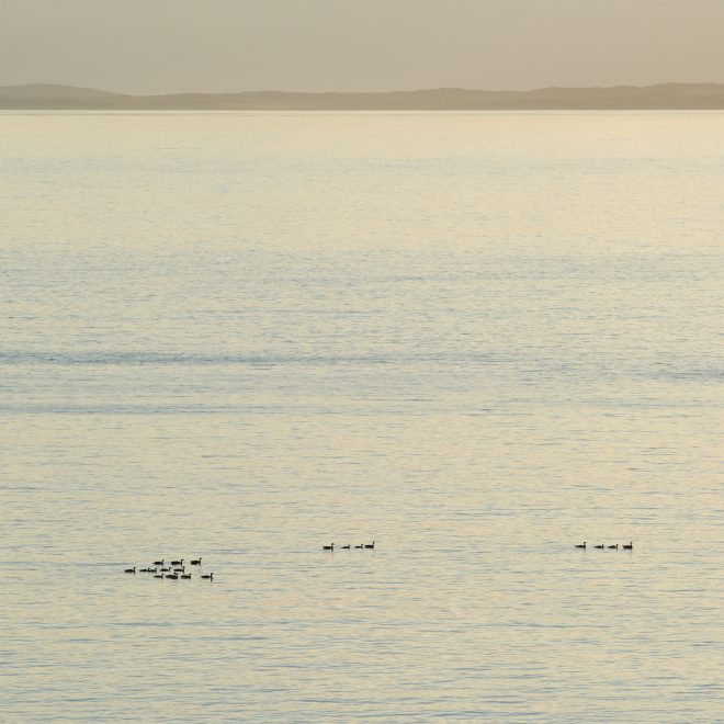 Hebridean Whale and Dolphin Trust sightings Treshnish Mull cottages sunset