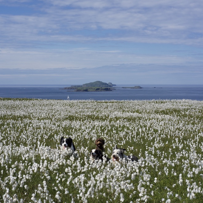 Treshnish holiday cottages dog walks on Mull