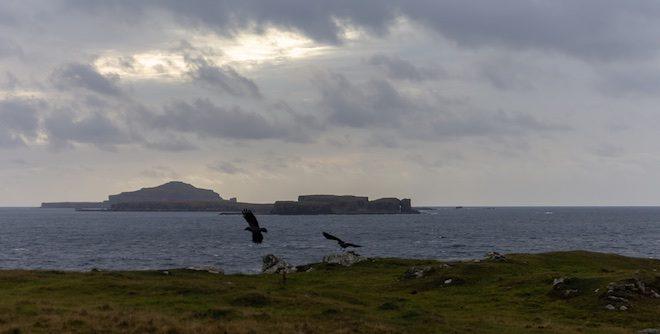 Treshnish-treasures-islands-Mull-ravens