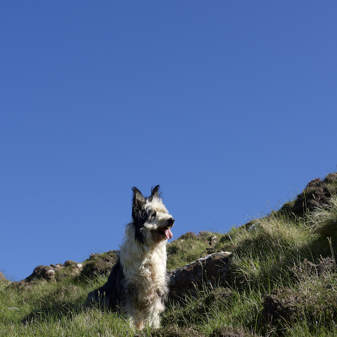 Walter Treshnish dog walks on Mull