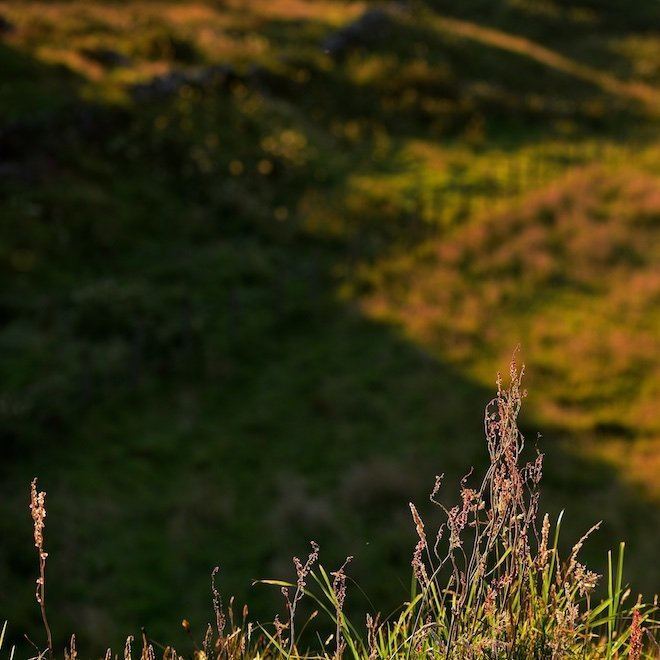sustainable tourism on mull grasses at sunset haunn cottages