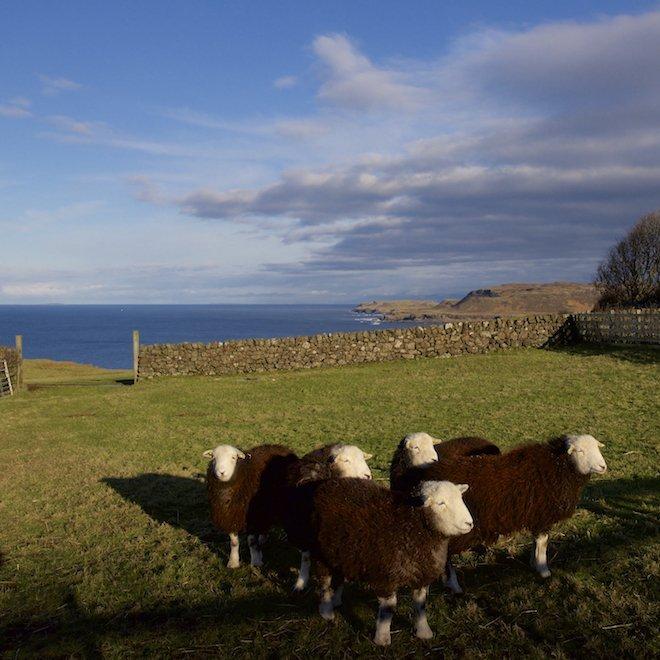 herdwicks short break on mull in october