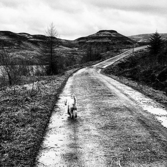Dog walks on Mull Loch Tor