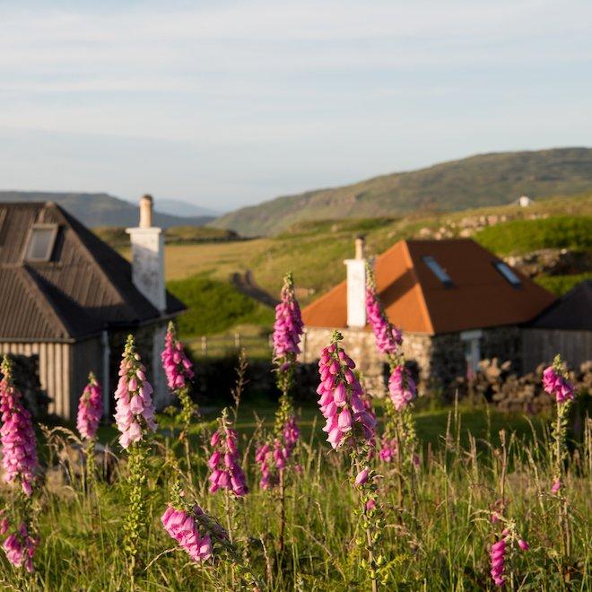 Treshnish & Haunn Cottages Covid Statement foxgloves