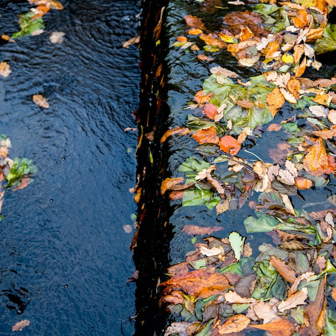 Aros PArk Mull auturmn leaves