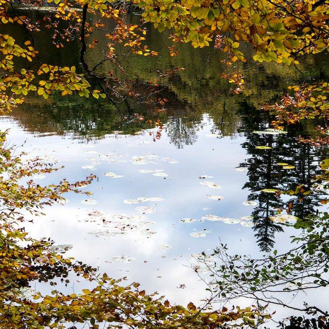Aros Park autumn lochan